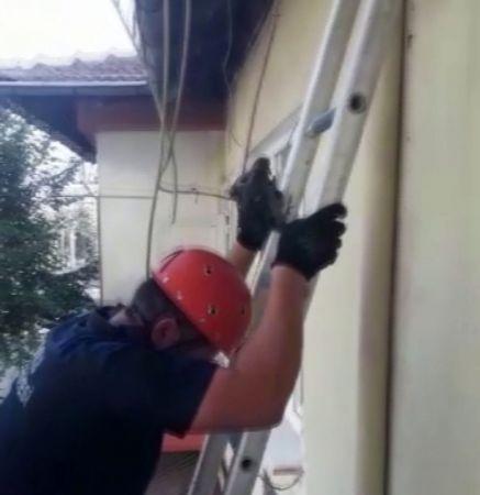 Çatıdan düşen yavru güvercini itfaiye yuvasına koydu