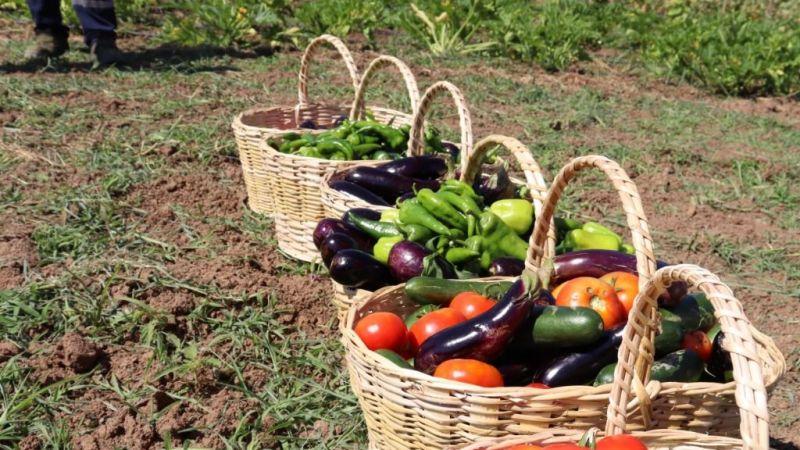 Kocaeli Haber - Tarımsal Üretim Bahçesi'nde yazlık bakımlar sürüyor