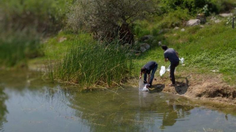 Kocaeli Haber - Kocaeli'de Göletlere 171 Bin Sazan Balığı Bırakıldı