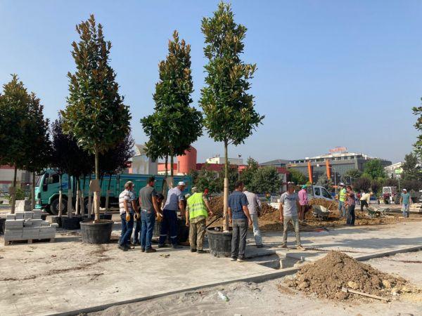 Düzce kent merkezinde 49 ağacın dikimine başlandı