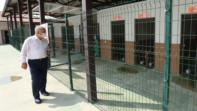 Kocaeli Haber - Sokak hayvanları rehabilitasyon merkezi örnek oluyor