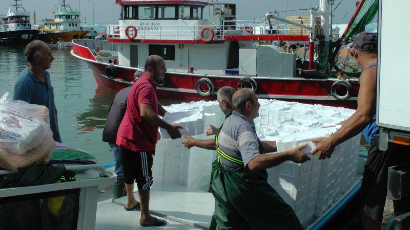 Karadeniz'de palamut ve hamsi bolluğu
