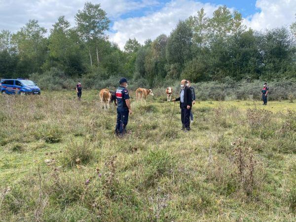 Otlattığı hayvanlar kayboldu, jandarma 6 kilometre uzakta buldu