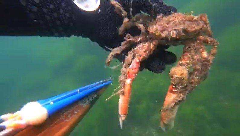 Salya altında ölen yengeç böyle görüntülendi