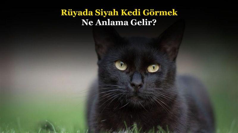 Rüyada Siyah Kedi Görmek Ne Anlama Gelir, Neye İşarettir? Anlamı, Yorumu