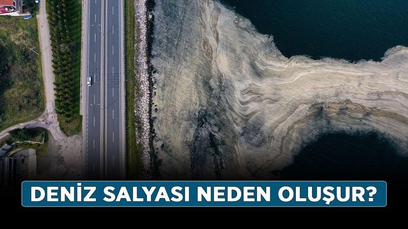 Deniz salyası nedir, nasıl temizlenir? Deniz salyası neden oluşur?