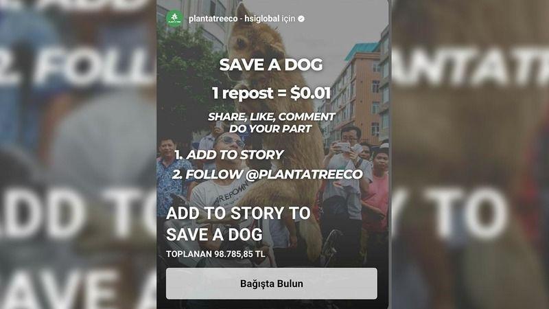 """""""Save a Dog"""" kampanyası yalan çıktı"""