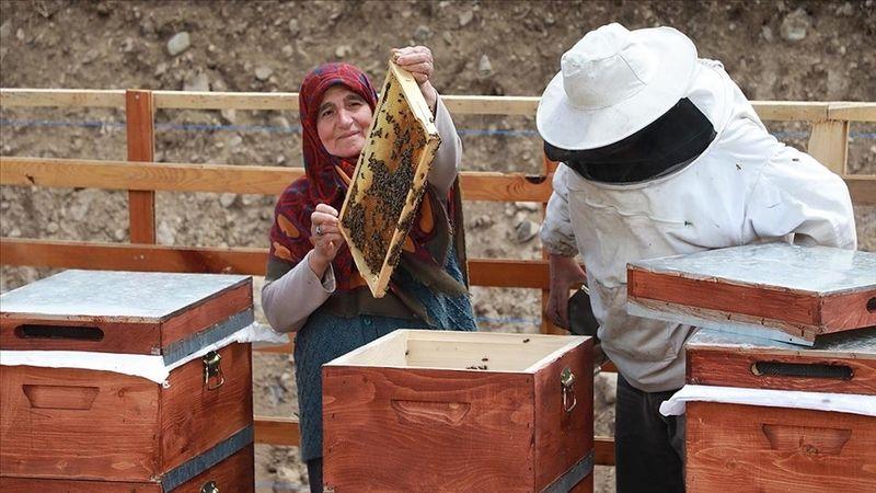 Anzer Yaylası'nda arıcıların bal mesaisi başladı!