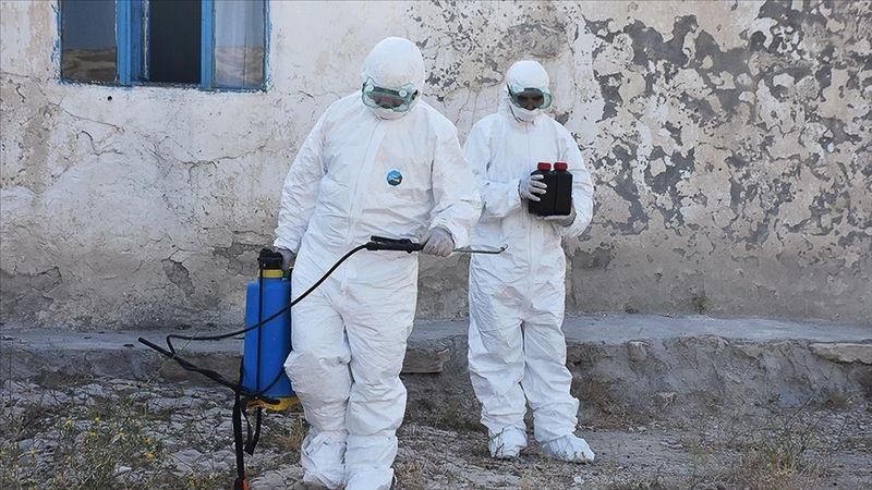 """Kaldırımdaki otlarla mücadelede kullanılan kimyasallarda """"kanser"""" riski iddiası"""