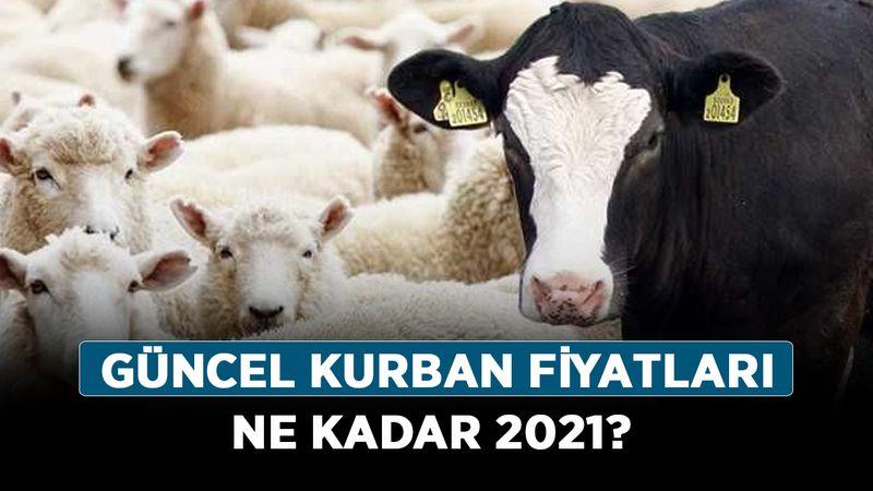 Güncel kurban fiyatları ne kadar 2021? Küçük-büyükbaş koç, koyun kurbanlık fiyatları nasıl?