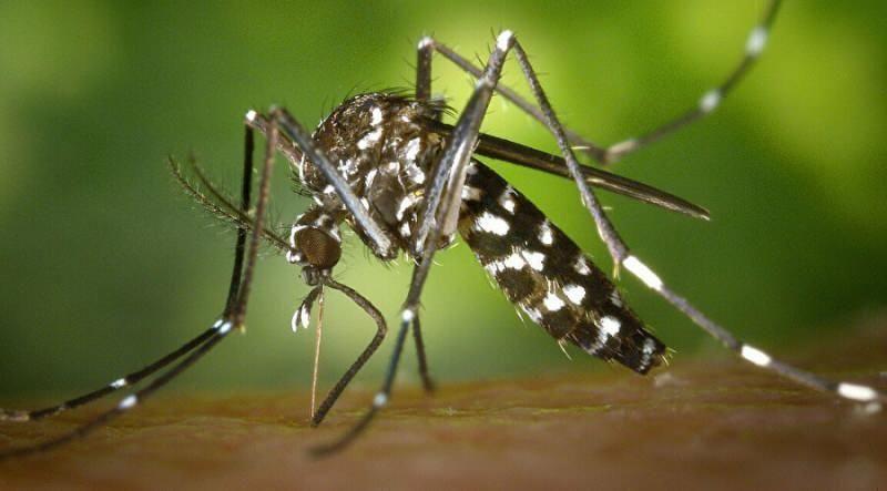Dikkat! Asya Kaplan Sivrisineği İstanbul'dan sonra 13 ilde daha görüldü