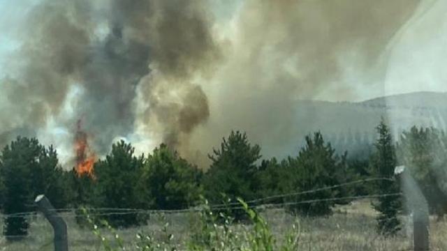 Atatürk Orman Çiftliği arazisinde yangın