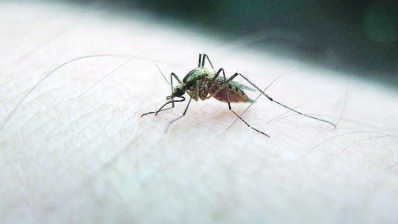 Çocuklarda sivrisinek ısırığına dikkat!