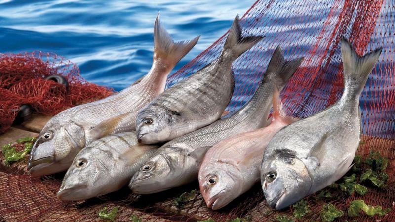 Su ürünleri ihracatı geçen yıla göre yüzde 40 arttı