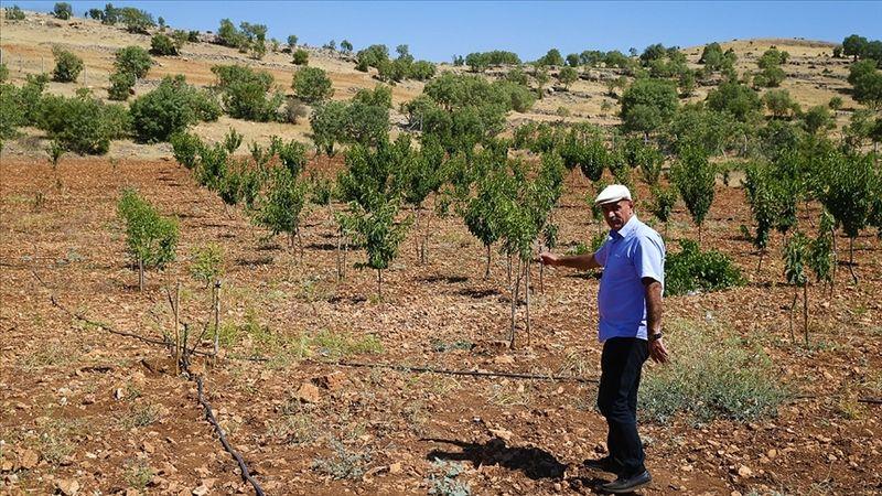 Hobi amaçlı satın aldığı atıl araziyi, 61 çeşit meyve yetiştirilecek bahçeye dönüştürdü