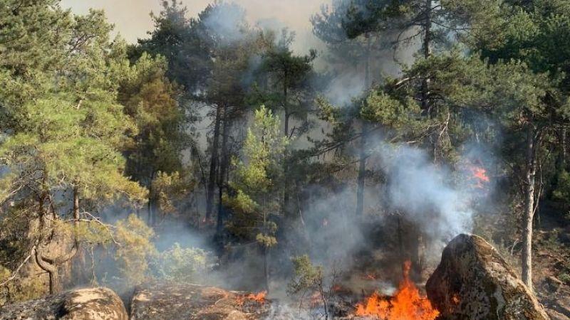 Aydın'ın Karpuzluk ilçesinde ormanlık alanda yangın çıktı