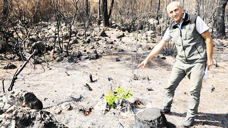 Manavgat ormanları küllerinden doğuyor