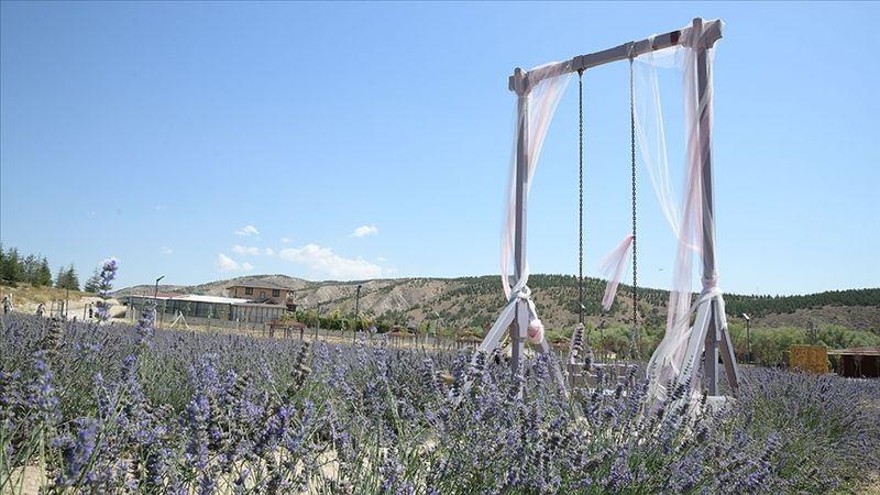 Ankara'nın doğu girişinde lavanta esintisi