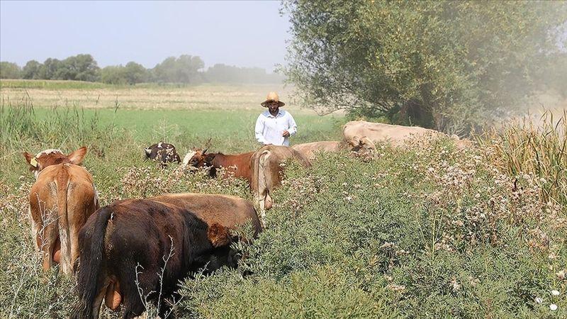 'Genç Çiftçi Projesi' sayesinde dar gelirli aileler köylerinde kaldı