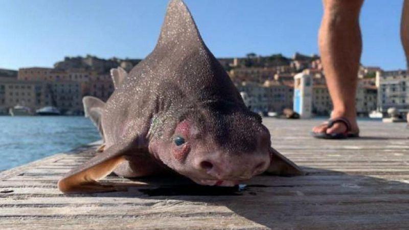 Akdeniz'de bulundu! Yassı kafalı, görüntüsü ve sesi ürküttü