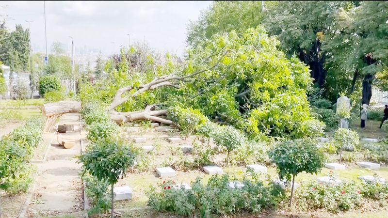 İBB'den şehitlikte ağaç katliamı