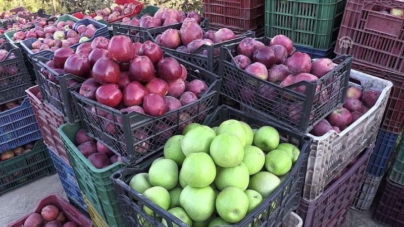 Afyonkarahisar'dan dünyaya elma ihracatı