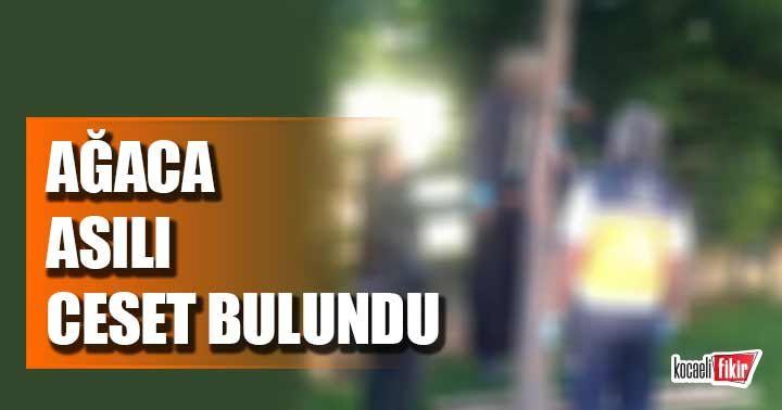 Kocaeli'de korkunç olay! Ağaca asılı ceset bulundu