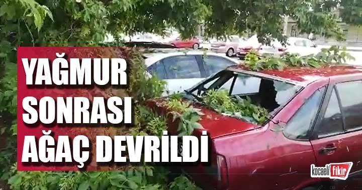İzmit'te yağmur sorası ağaç devrildi