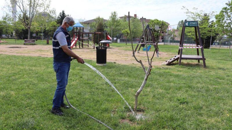 İzmit'in parklarındaki ağaçlarbu yıl ilk meyvelerini verecek