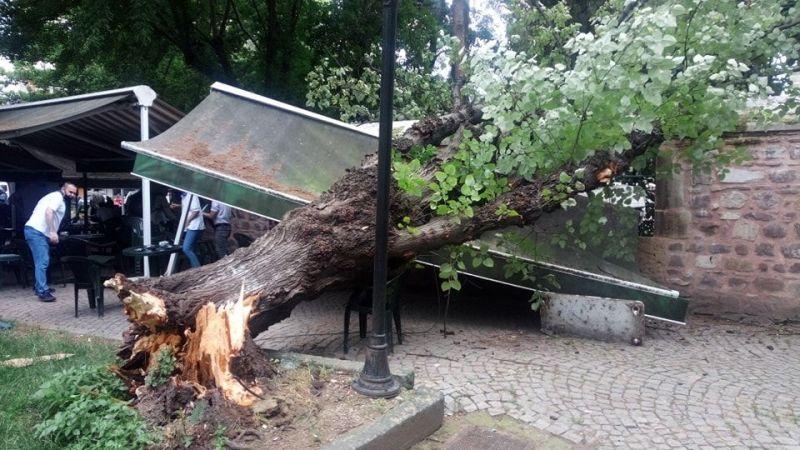 Asırlık ıhlamur ağacı yıkıldı