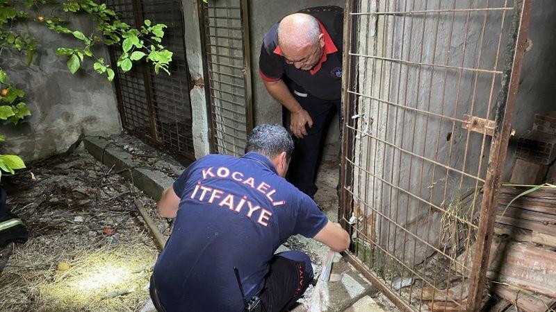 Enkaz altından insan çıkarır gibi kedi kurtarma operasyonu