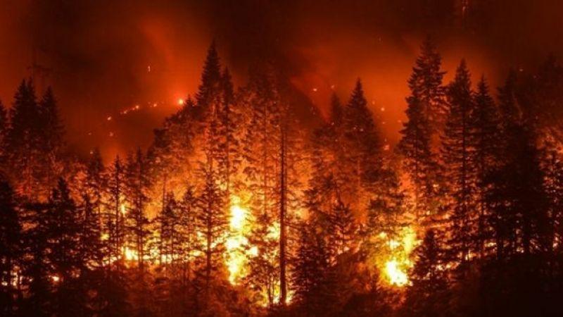İşte orman yakmanın cezası