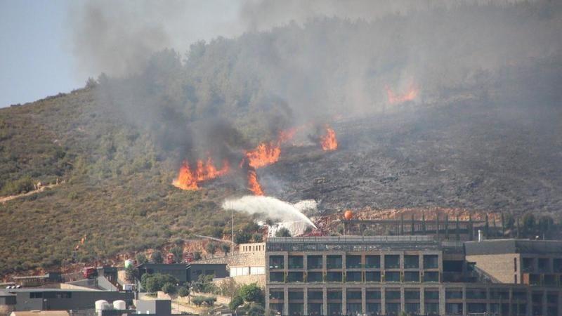 İstanbul'da ağaçlık alanda yangın
