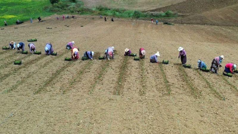 Tarım teşviklerinden 160 kadın yararlandı