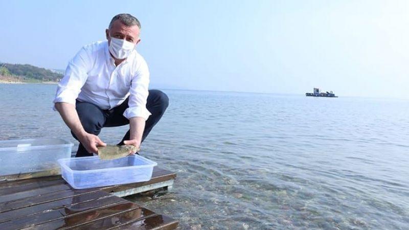 Marmara Denizi'nden güzel haber