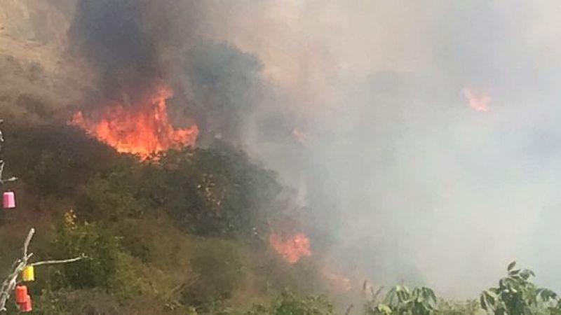 Tekirdağ'da ağaçlık alanda yangın çıktı