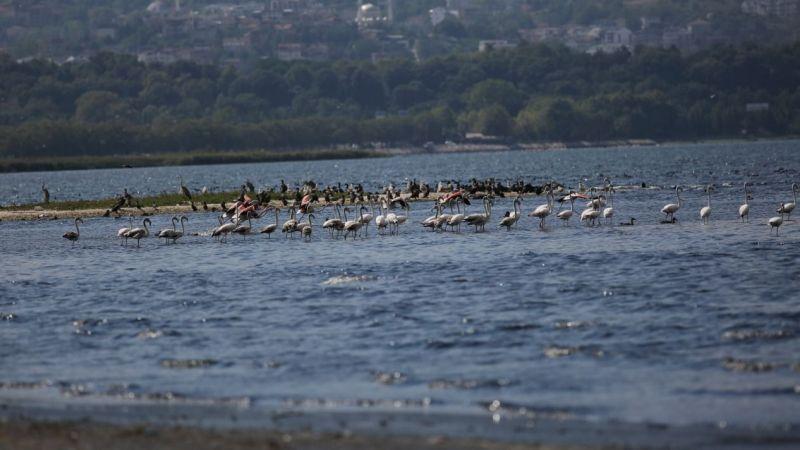 Körfez'de flamingolardan görsel şölen