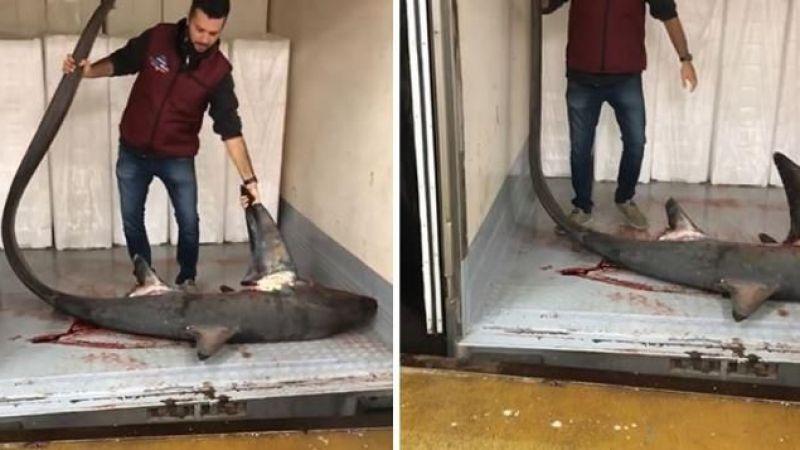 Marmara Denizi'nde 4 metre uzunluğunda dev köpek balığı yakalandı