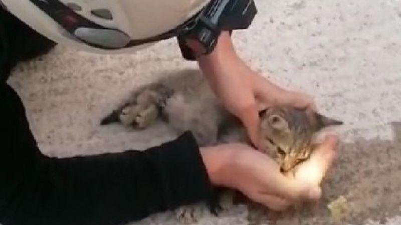 İtfaiye eri kalbi duran kediyi hayata döndürdü