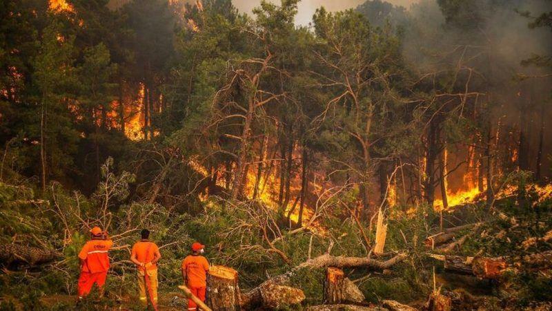 Yangında yanan 30 milyon ağaç kesilecek