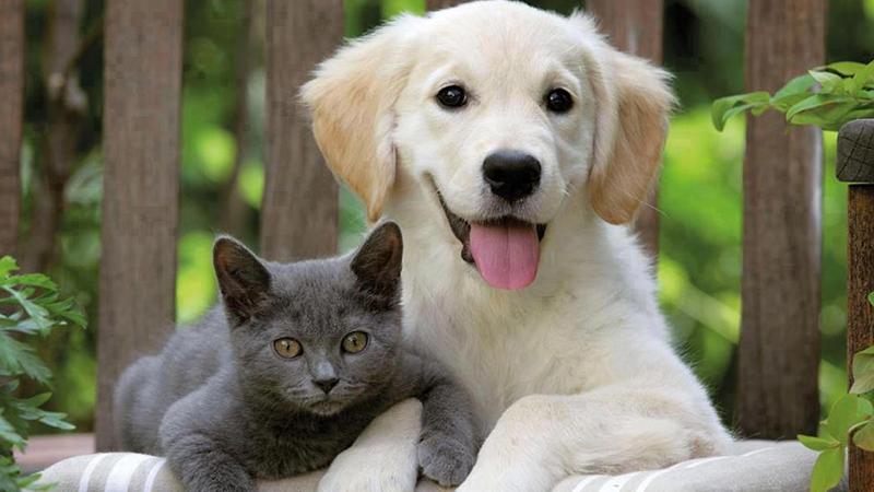 Sahipli kedi ve köpeklere mikroçip takma zorunluluğu!