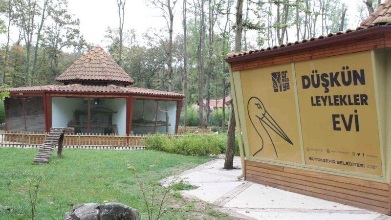 Ormanya'da Düşkün Leylekler için açık hava barınağı yapıldı