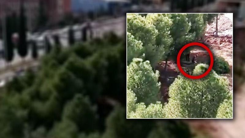 Şanlıurfa'da ağaçlar kesildi iddiası!