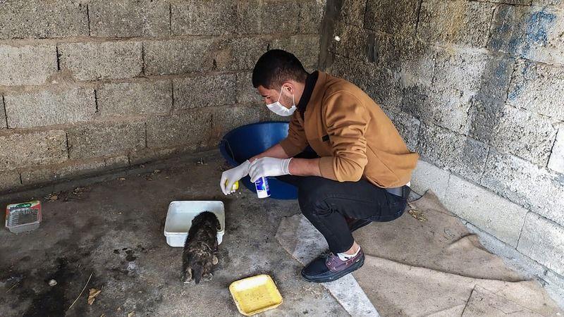 Urfa'nın ilçesinde sokak hayvanlarına yardım eli uzatıldı