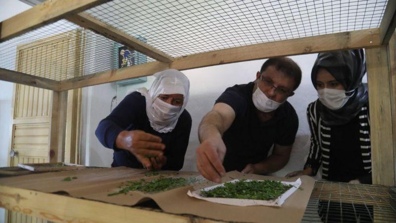 Urfa'da ipekböcekçiliği için çiftçiye destek!