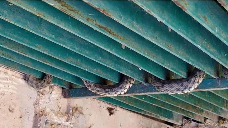 Urfa'da bir evin çatısında görüldü: Paniğe neden oldu!