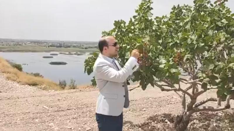 Urfa'daki Kaymakamdan flaş 'fıstık' açıklaması