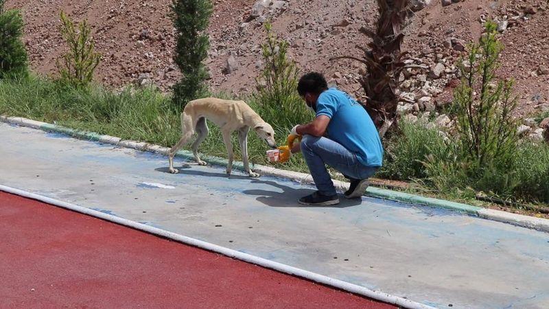 Sokak hayvanları için çalışma yapılıyor