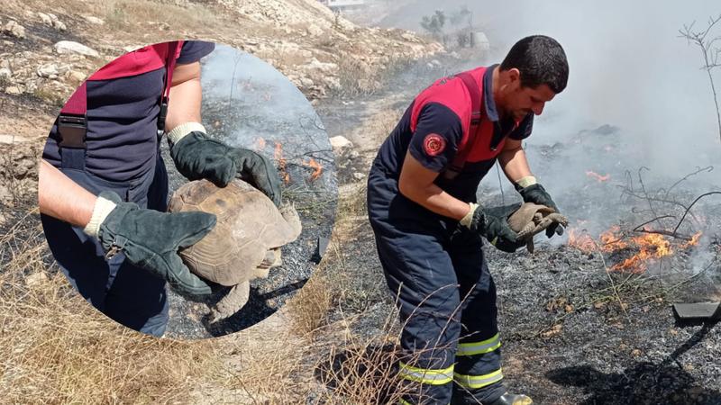 Urfa'da anız yangını! İtfaiye kurtardı