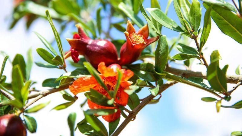 Urfa'nın ilçesine tescilli: Çiçekleriyle kente renk kattı!